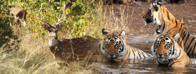 Ranthambore: The Incredible National Park Of India